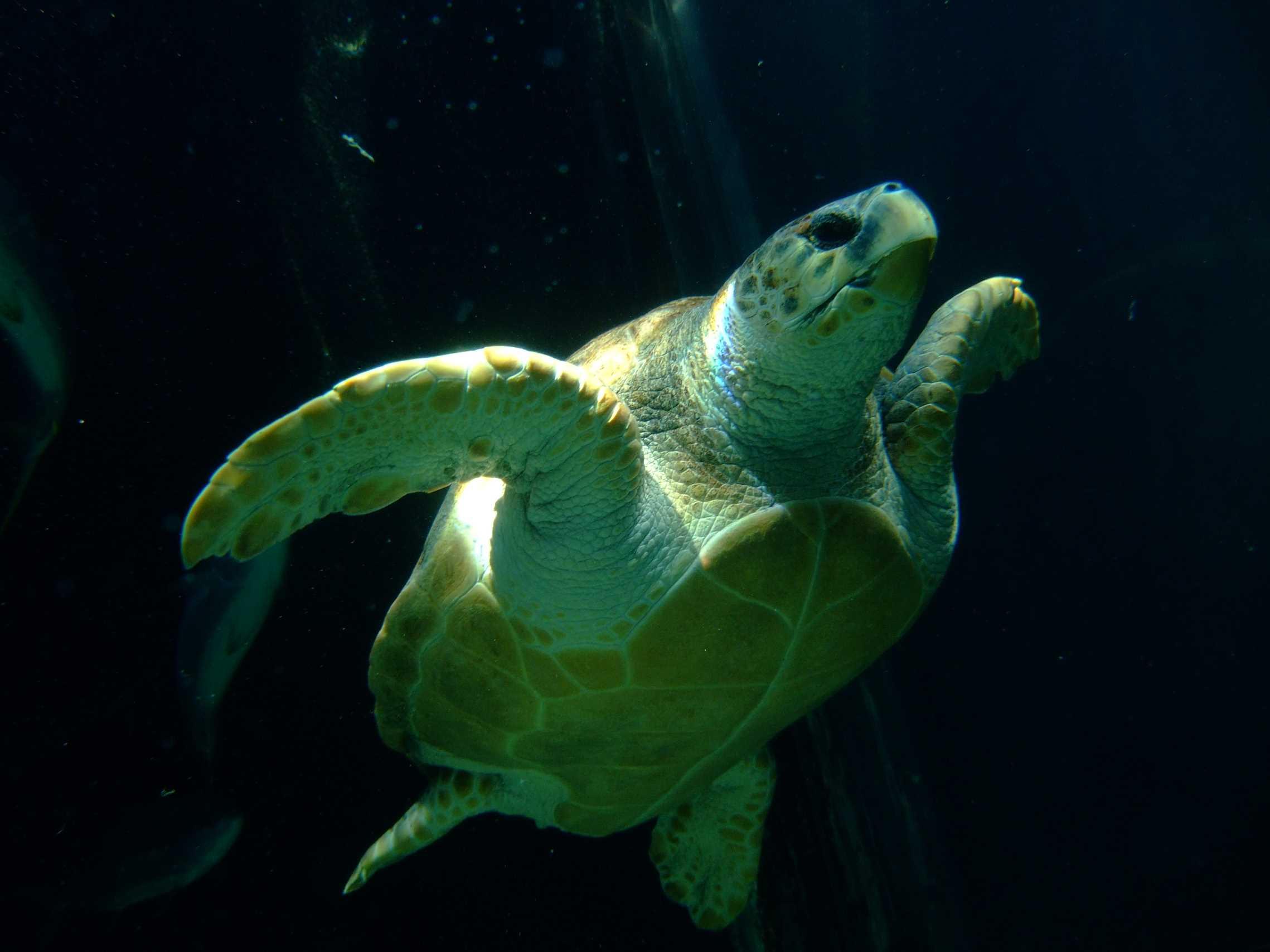 aquarium-dive-17