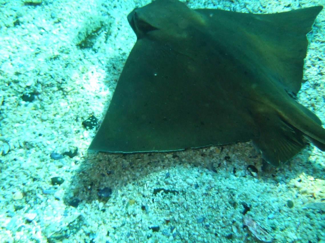 aquarium-dive-32