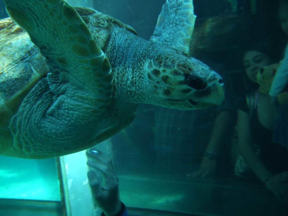 aquarium-dive-34