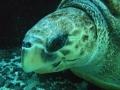 aquarium-dive-10