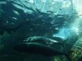 aquarium-dive-11