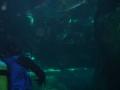 aquarium-dive-12