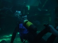 aquarium-dive-13
