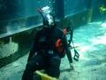 aquarium-dive-14