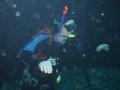 aquarium-dive-19