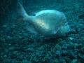 aquarium-dive-23
