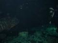 aquarium-dive-27