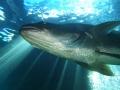 aquarium-dive-30