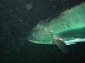 aquarium-dive-31