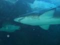 aquarium-dive-35