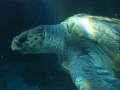 aquarium-dive-4
