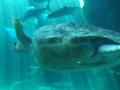 aquarium-dive-5