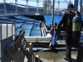 aquarium-dive-7