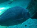 aquarium-dive-8