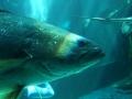 aquarium-dive-9