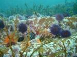 Cape Town Diving