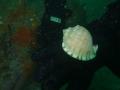 cape-town-diving-126
