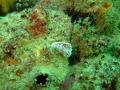 cape-town-diving-138