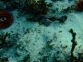 cape-town-diving-56