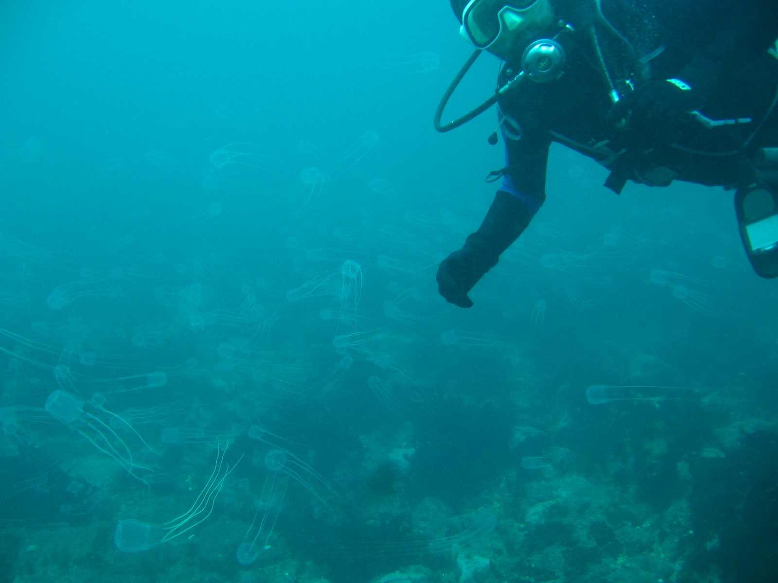 club_divers-50