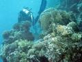 club_divers-45