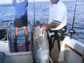 spearfishing_10