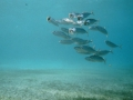 underwater-photos-12