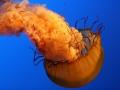 underwater-photos-2