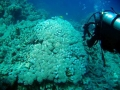 underwater-photos-29