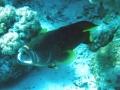 underwater-photos-30