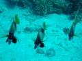 underwater-photos-32