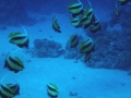 underwater-photos-34