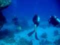 underwater-photos-36