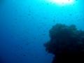 underwater-photos-38