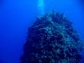 underwater-photos-39