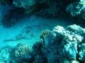 underwater-photos-41
