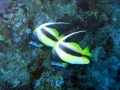 underwater-photos-46