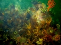 underwater-photos-58