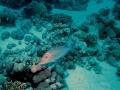 underwater-photos-9