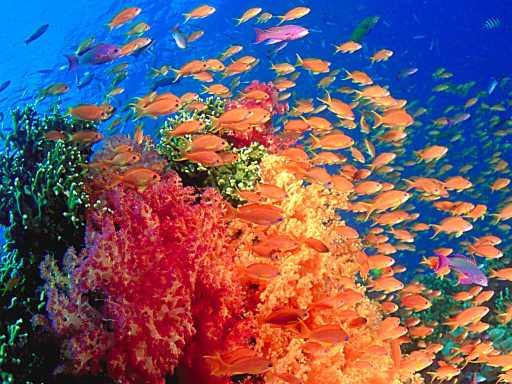 underwater-photos-1