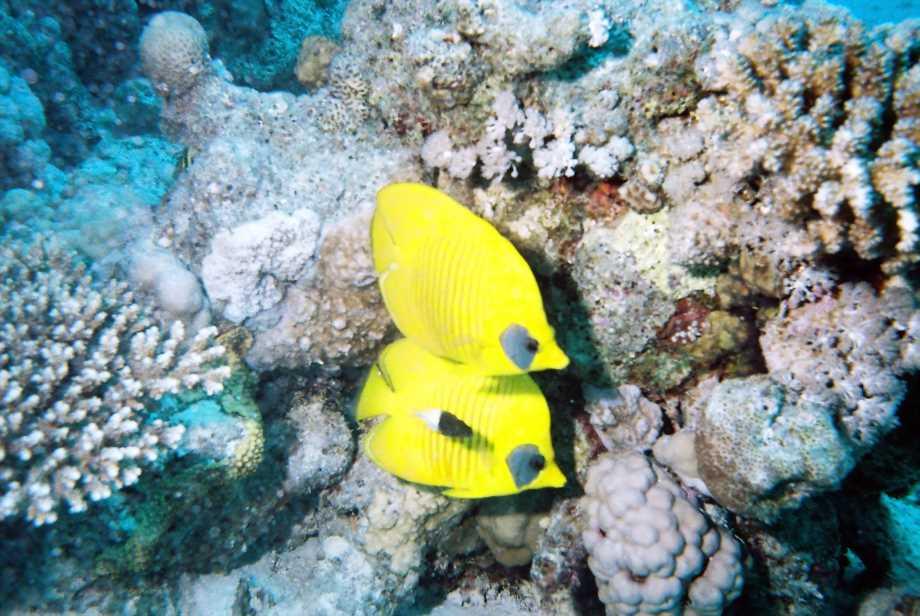 underwater-photos-10