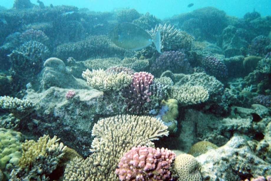 underwater-photos-15
