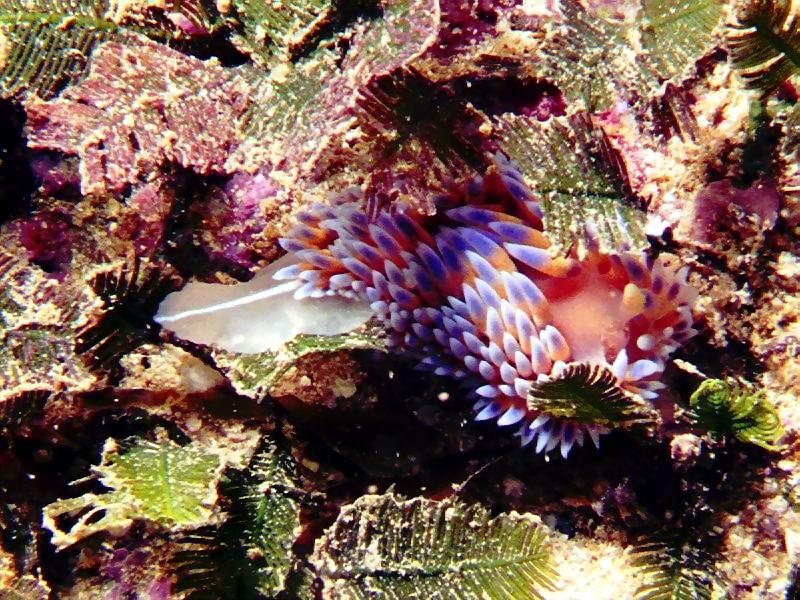 underwater-photos-17