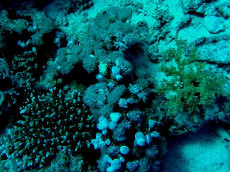 underwater-photos-24