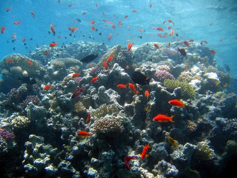 underwater-photos-27