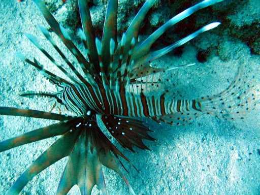 underwater-photos-28