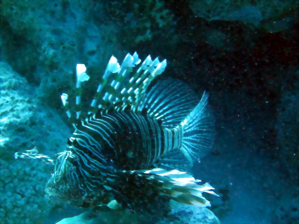 underwater-photos-31