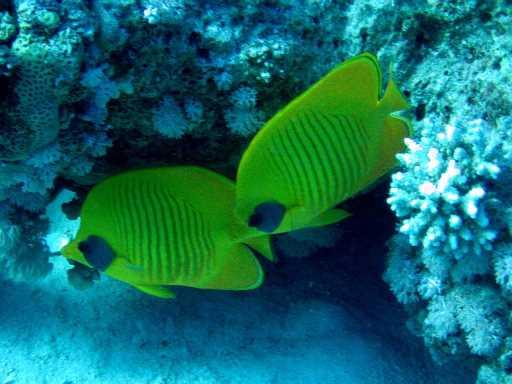 underwater-photos-33