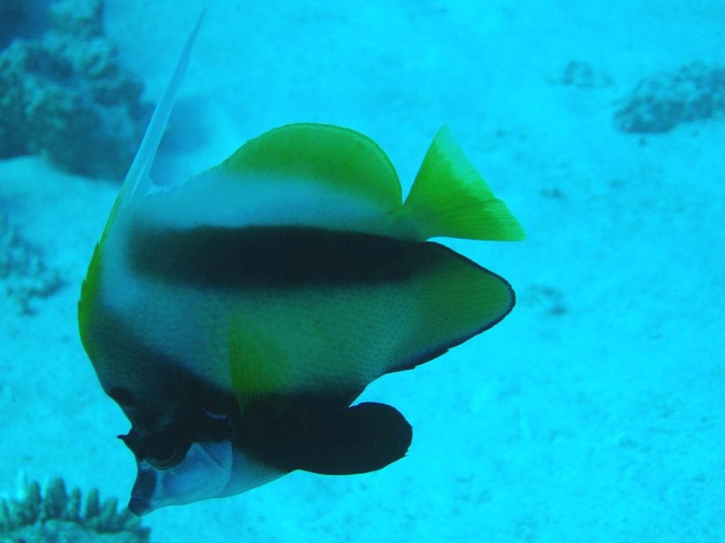 underwater-photos-35