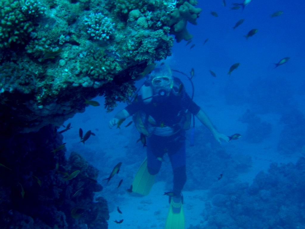 underwater-photos-37
